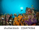 various coral fishes ... | Shutterstock . vector #226474366