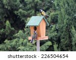 The Birds Titmouse Feeding On ...