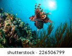 common lionfish swimming above... | Shutterstock . vector #226506799