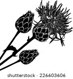 Milk Thistle Flowers Isolated...
