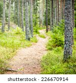 Path in forest during autumn, Sweden - stock photo