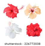 Flower Isolated On White...
