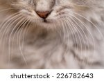 Long White Whiskers And Nose O...