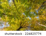 Autumn Trees Top In Forest ...