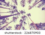 looking up through autumn trees ... | Shutterstock . vector #226870903