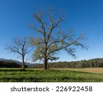 Trees In Cades Cove In The...