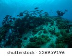 diver and group of chubs fishes ... | Shutterstock . vector #226959196