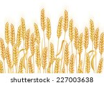horizontal background with ears ... | Shutterstock . vector #227003638