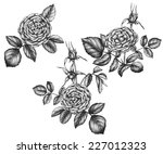 hand drawn tea rose flowers. | Shutterstock .eps vector #227012323