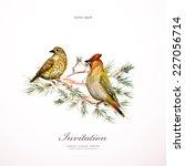 watercolor painting wild bird... | Shutterstock .eps vector #227056714
