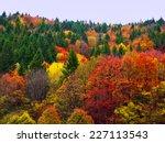 autumn fall forest trees... | Shutterstock . vector #227113543