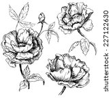 hand drawn peonies. vector... | Shutterstock .eps vector #227122630
