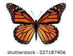 Stock photo beautiful monarch butterfly isolated on white background 227187406