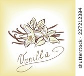 vanilla. vector sketch  | Shutterstock .eps vector #227212384