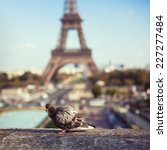 Pigeon On Eiffel Tower...