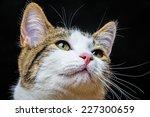 Stock photo a cat portrait close up 227300659