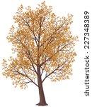 Tree In Fall. Gradients Free....