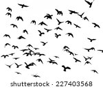 silhouette of flying birds on... | Shutterstock . vector #227403568