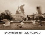 seagulls and capitol building   ... | Shutterstock . vector #227403910