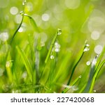 water drops on a green grass | Shutterstock . vector #227420068