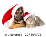 Stock photo cat and dog with santa claus hat isolated on white background 227504716