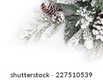 Fir Tree Branch Covered With...
