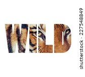 Word Wild Close Up Of A Tigers...