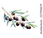 Watercolor Olive Branch On...