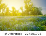 flowered forest glade at the... | Shutterstock . vector #227601778