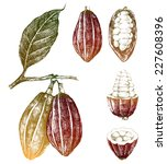 hand drawn cocoa beans set in... | Shutterstock .eps vector #227608396