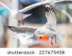 segulls  bangpu   thailand | Shutterstock . vector #227675458