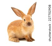 rabbits isolated on white... | Shutterstock . vector #227702908