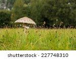 Mushroom Growing In The Muerit...