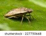 bug on leaf | Shutterstock . vector #227750668