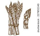 vector set of engraving... | Shutterstock .eps vector #227852140