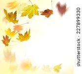 autumn leaves | Shutterstock . vector #227899330