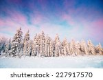 magical winter snow covered... | Shutterstock . vector #227917570