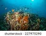 various reef fishes swim above... | Shutterstock . vector #227975290