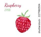 watercolor raspberry. hand... | Shutterstock .eps vector #227980504