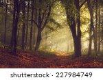morning light through the trees ... | Shutterstock . vector #227984749