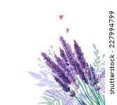 watercolor lavender bouquet... | Shutterstock .eps vector #227994799