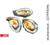 oysters painted in watercolor    Shutterstock .eps vector #227995096
