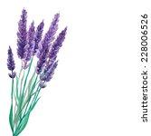 watercolor lavender bouquet... | Shutterstock .eps vector #228006526