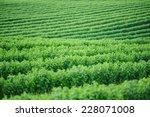 summer landscape. green field | Shutterstock . vector #228071008