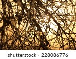 branches of a tree at sunset | Shutterstock . vector #228086776
