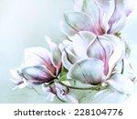 Fabulous Magnolia Flowers In...