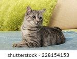 Cat  Resting Cat On A Sofa...