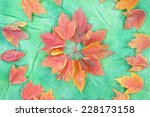 autumn leaves on a green...   Shutterstock . vector #228173158