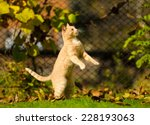 Stock photo funny jumping cat 228193063