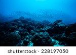 school of scad fish in dimakya... | Shutterstock . vector #228197050